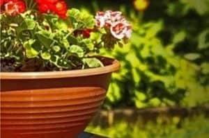 kwiaty-w-donicy